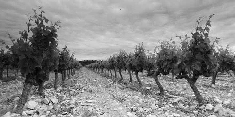 concealed-wines-viner-fran-hela-varlden-i-sverige